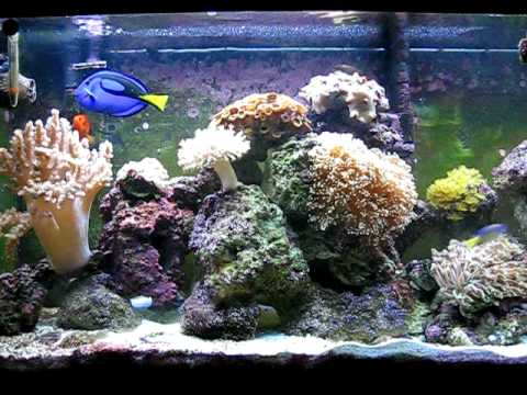 My saltwater reef tank 55 gallon youtube for 20 gallon saltwater fish tank
