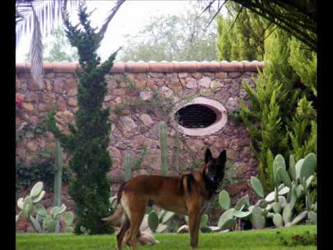 Living San Miguel de Allende 2009, by Alison Sabul