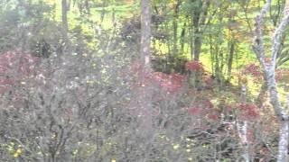 #5022, Arboles de hojas rojas entre montaña [Raw], Paisajes rurales