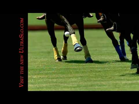 Polo ball strike in UltraSlo slow motion
