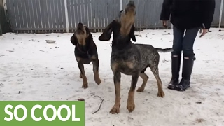 Pair of dogs love to sing their hearts out
