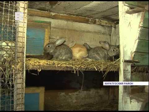 Кролики-великаны (Енисей Минусинск)