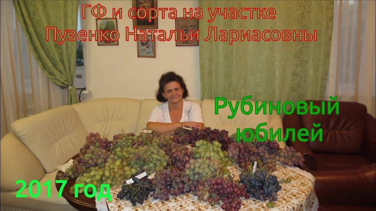 Виноград сорт рубиновый юбилей фото описание