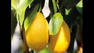 Limone i benefici anti tumore