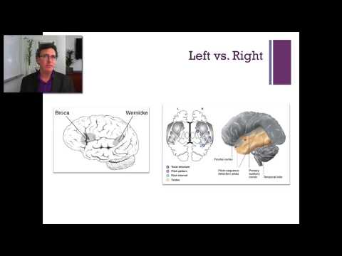 Lecture 5   The Temporal Lobe thumbnail
