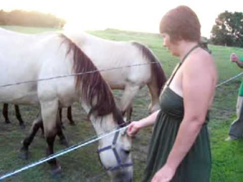 Woman Has Sex With Electric Fence And Loses Finger .  Horses Watch In Awe! video