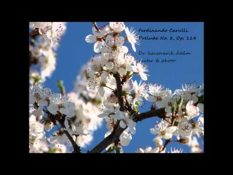 Фердинандо Карулли - Opus 114 No 8 Prelude