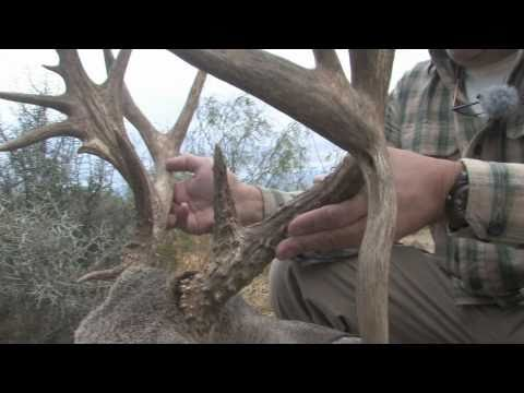 HUGE SOUTH TEXAS  WHITETAIL HUNT