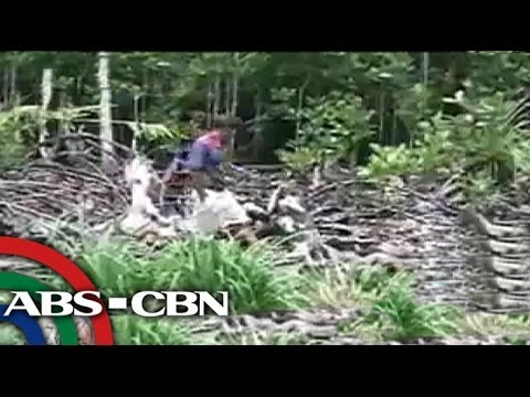 TV Patrol Palawan - July 3, 2014