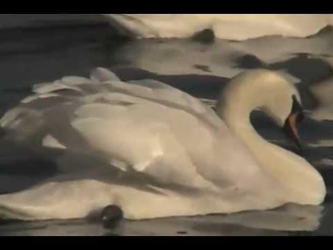 Govind bolo Hari Gopal bolo (instrumental)