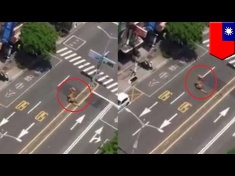 Man in dinosaur costume is caught running around outside during Taiwan air raid drill - TomoNews