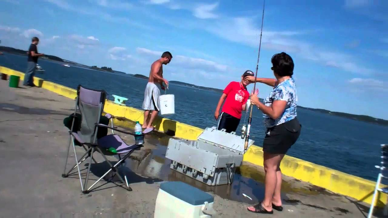 Eastport maine mackerel fishing youtube for Maine out of state fishing license