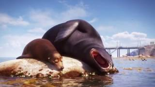 Finding Dory | Marine Life Interviews