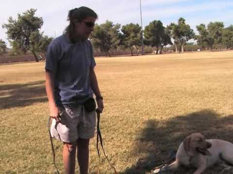 Villa La PAWS - Dog Training -  Heeling Part 2 11-10-09
