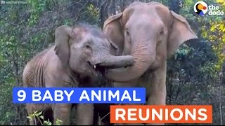 9 Animals Reunited With Their Babies: Animal Reunion Compilation | The Dodo Daily
