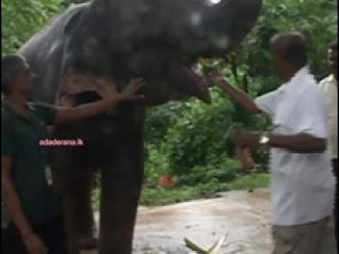 training elephants f|eng