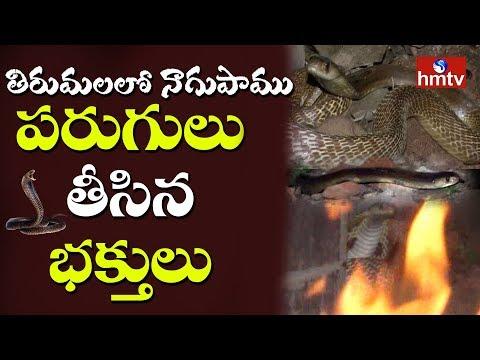 తిరుమలలో నాగు పాము కలకలం...చాకచక్యంగా బంధించిన సిబ్బంది | hmtv Exclusive Visuals | Telugu News