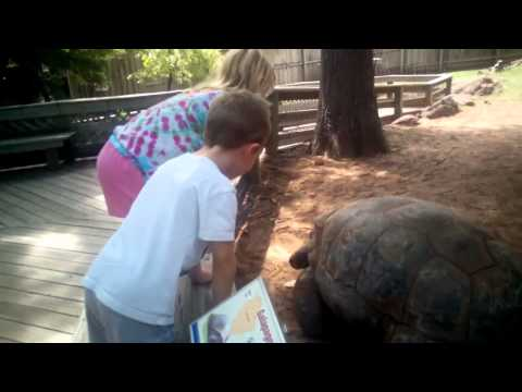 Petting the giant tortoise at Dallas Zoo