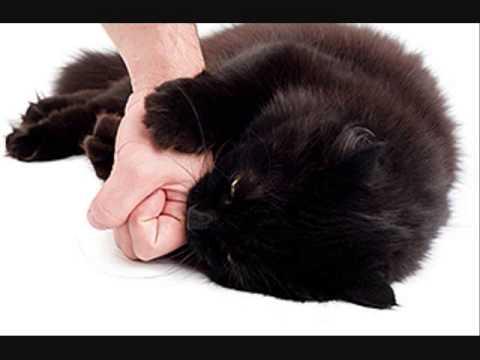 Cat Scratch Fever Pantera Youtube