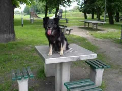 sztuczki mojego psa - BASTER