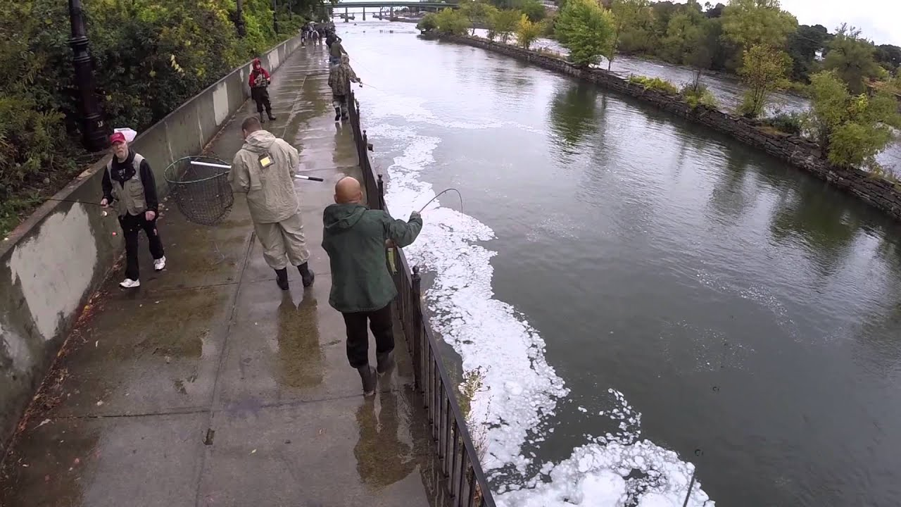 Salmon run oswego youtube for Oswego river fishing report
