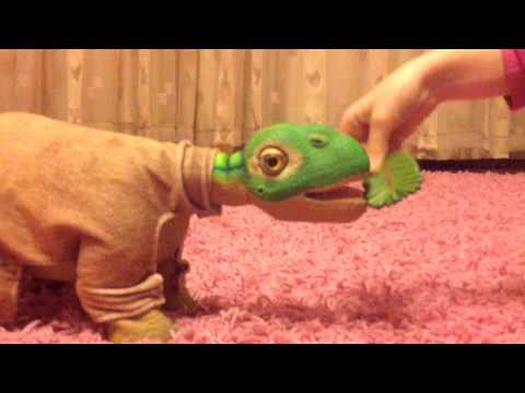 Динозаврик ❤️Плео❤️