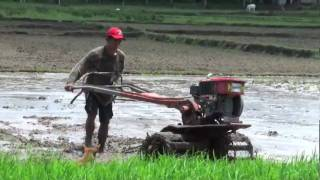 Life in a Day?Philippine Rice Field
