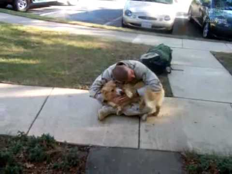Commovente festeggiamento di un cane per il ritorno del padrone dall'Afghanistan