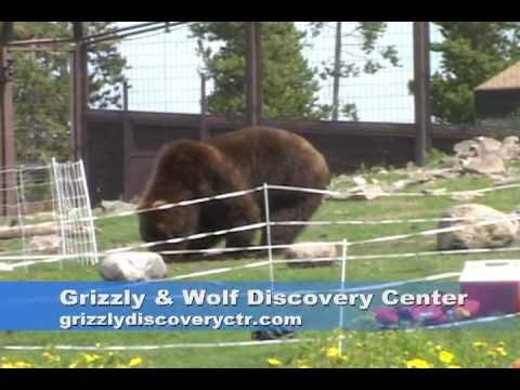Bear Fence Test
