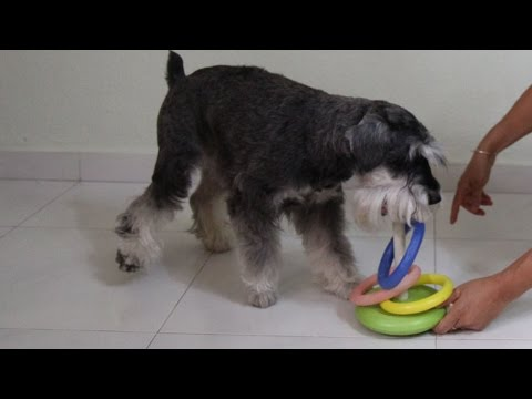 480 x 360 · 13 kB · jpeg, Funny Dog Tricks starring Homer the mini ...