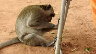 Monkey kisses a lovely kid, Great bonding of monkey Sok & human kid