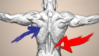 How To Workout To Target LOWER BACK Vs UPPER BACK