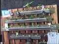Vertical Gardening in Rain Gutters So You Can Grow Food Anywhere