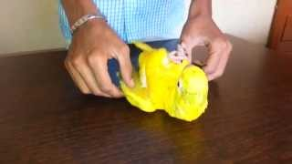 Golden Conure in (Preethi Farms)