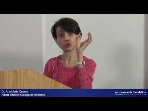 Autophagy and Intracellular Aggregates - Dr. Ana Maria Cuervo