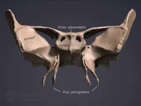 3D Анатомический Атлас