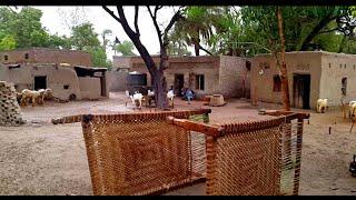 Rain In Punjab Village Rural Life In Pakistan
