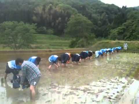 皆生温泉オリジナル日本酒『海に降る雪』田植え2011その2