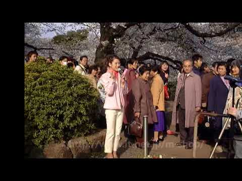 1998年〜2008年の桜