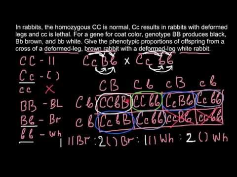 Lethal gene and dihybrid cross
