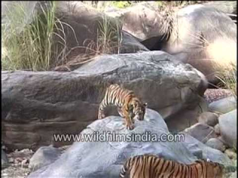 Incredible India wildlife and adventure sports TVC