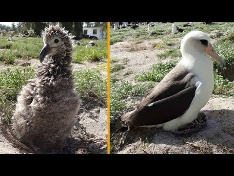 WORLD'S OLDEST WILD BIRD HATCHES CHICK