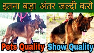 Difference Between Pets Quality and Show Quality Dogs // How To Make Your Dog Healthy