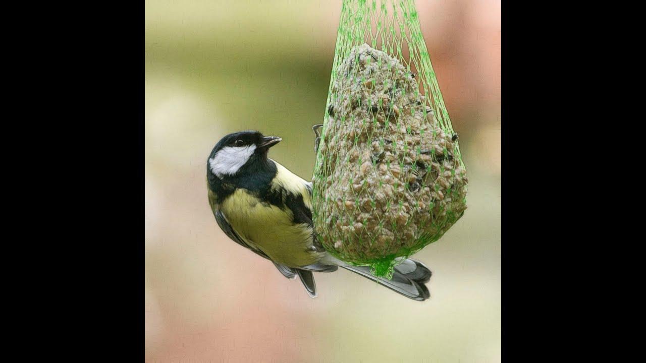 Biobricolaje 16 comederos para aves silvestres youtube - Jardines sencillos ...