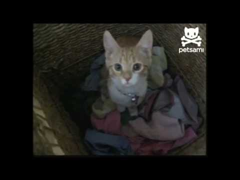 Cat helps out with the dirty laundry
