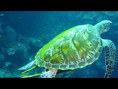 It's Better in Bohol--Diving Balicasag Island, Philippines (HD)