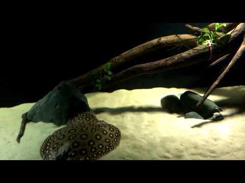 Песок для аквариума. Замена речного песка на кварцевый 0.5-0.8мм