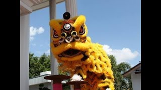 Happy Chinese New Year of the Horse 2014 Acrobatic Lion Dance in Malaysia
