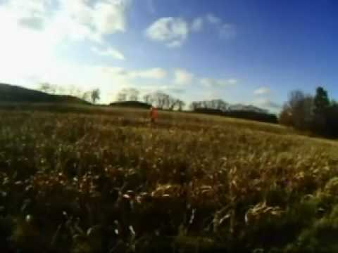 Fazan Pheasant Hunting Green Lake Wi