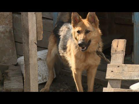 Жительница Барнаула и 40 собак остались без крыши над головой после пожара